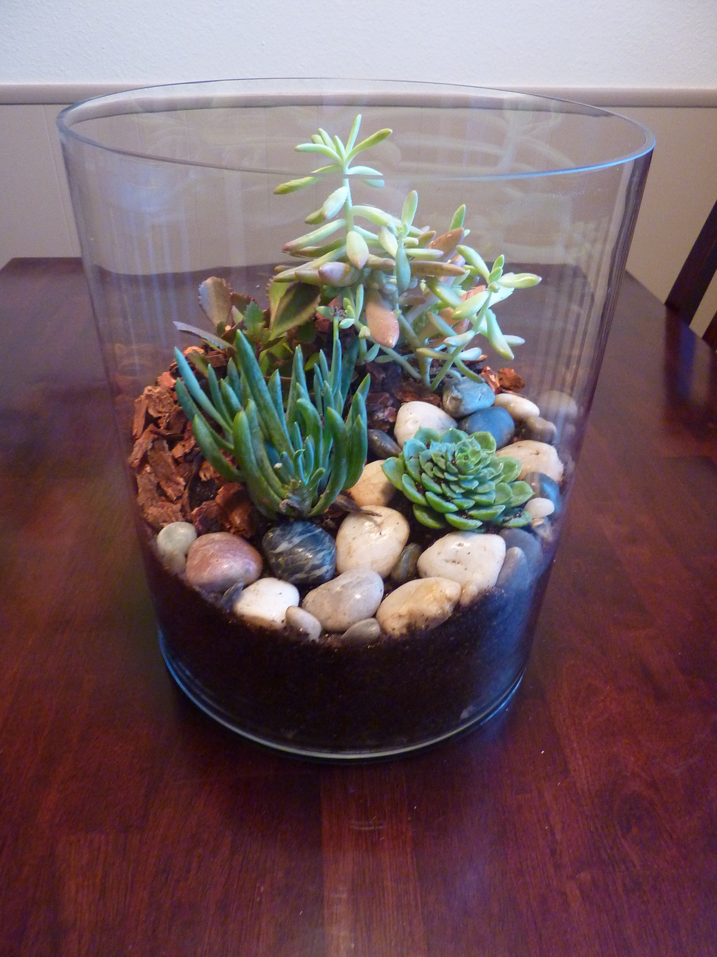succulent terrarium pinterest challenge in which a tiny plastic object scares the living. Black Bedroom Furniture Sets. Home Design Ideas