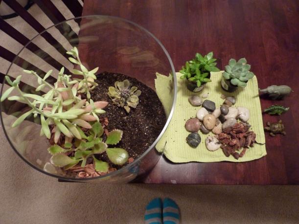 succulent terrarium shenanagins