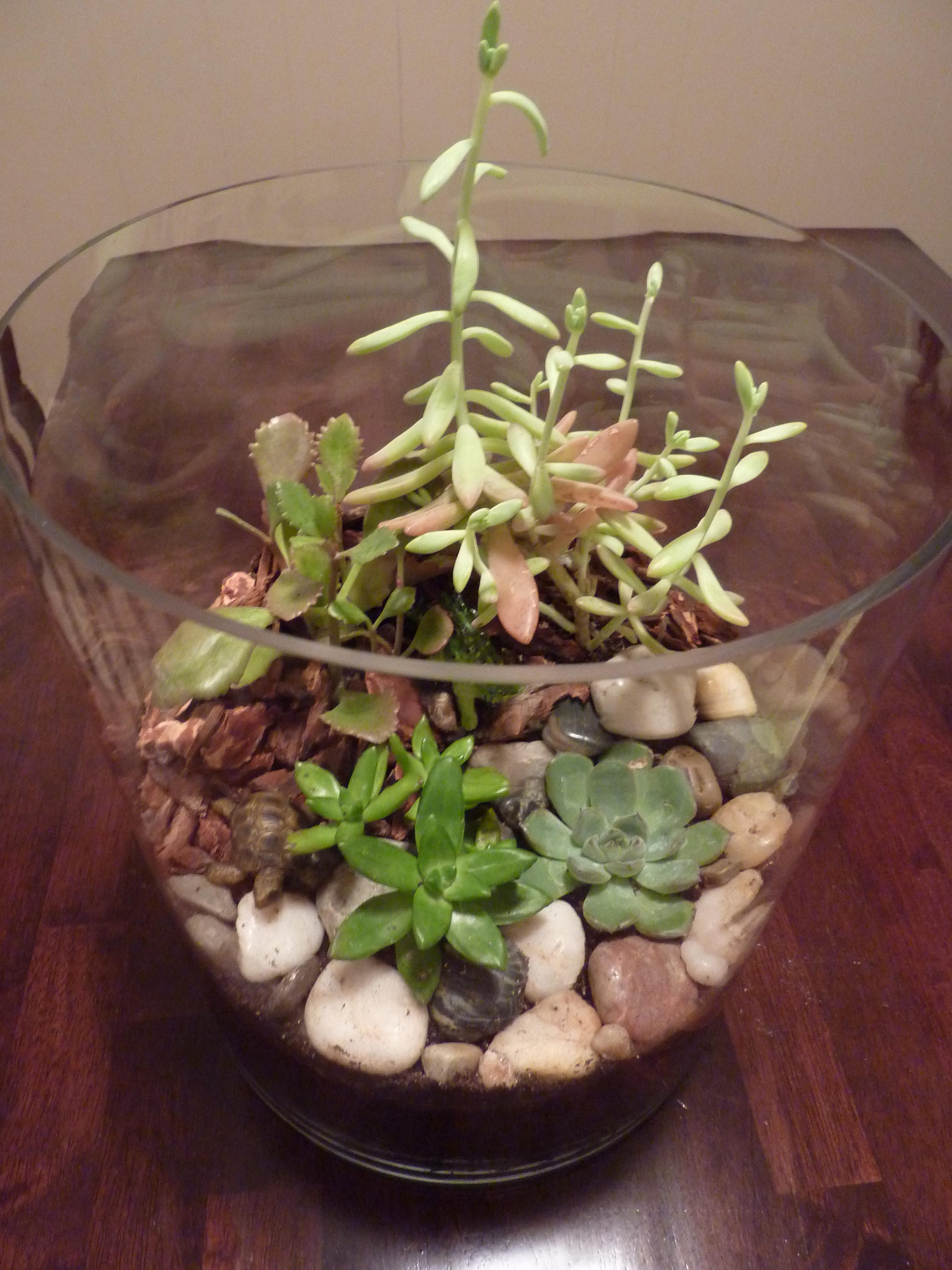 succulent terrarium with rocks and bark!
