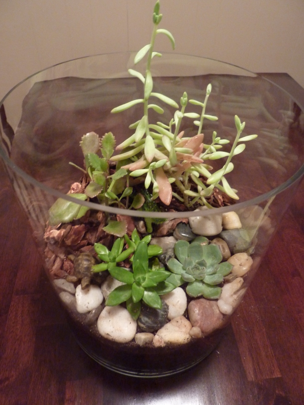 succulent terrarium with rocks and bark!