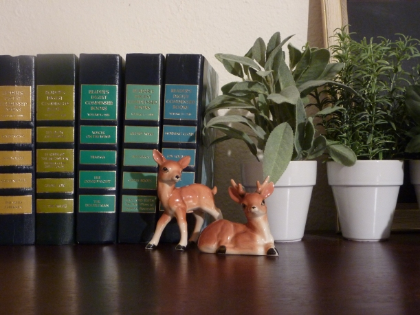 fawns in their new home