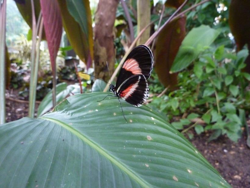 frederick meijer gardens butterfly exhibit